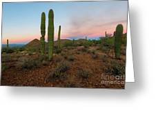 Saguaro Dusk Greeting Card