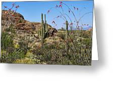 Saguaro National Park East Scene Iv Greeting Card