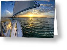 Sailing Sunset Charleston Sc Beneteau 49 Greeting Card
