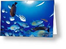 Saipan Marine Life Greeting Card