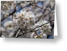 Sakura Spring Greeting Card