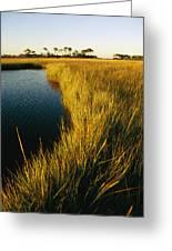 Salt Marsh, Assateague Island, Virginia Greeting Card
