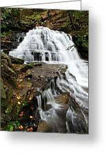Salt Springs Waterfall Greeting Card