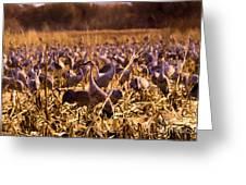 Sandhills In The Corn Greeting Card
