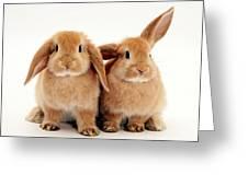 Sandy Lop Rabbits Greeting Card
