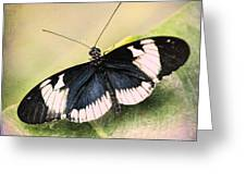 Sapho Longwing Butterfly Greeting Card