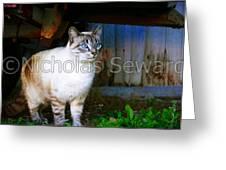Sapphire Eyed Cat Greeting Card