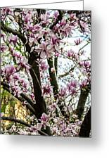 Saucer Magnolias In Central Park Greeting Card