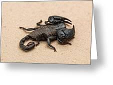 Scorpion Greeting Card