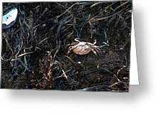 Scuttling To Safety Greeting Card
