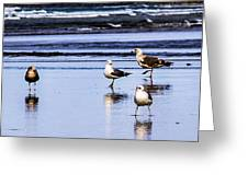 Sea Birds Greeting Card