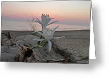 Summer Sea Lilies Greeting Card