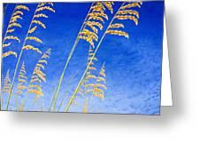 Sea Oats Greeting Card
