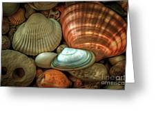 Sea Pebbles With Shells Greeting Card
