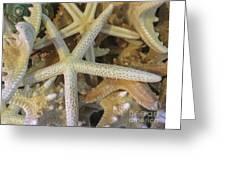 Starfish Treasure Greeting Card