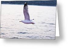 Seagulls Flying Greeting Card