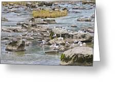 Seagulls On The Rocks Greeting Card