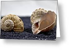 Seashells On Black Sand Greeting Card