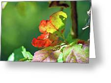 Seasons Change Greeting Card