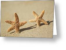 Seastars On Beach Greeting Card