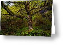 Secluded Tree Greeting Card