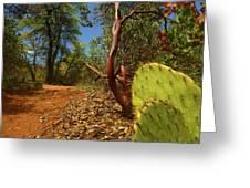 Sedona Area Greeting Card