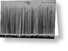 Semiconductor Nanowires, Sem Greeting Card