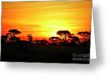 Serengeti Sunset Greeting Card