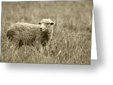Sheep In A Meadow Greeting Card