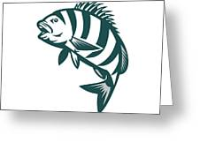 Sheepshead Fish Jumping Isolated Retro Greeting Card