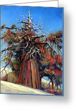 Sierra Juniper Greeting Card