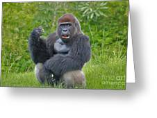 1- Silverback Western Lowland Gorilla  Greeting Card