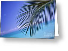 Single Palm Frond Greeting Card