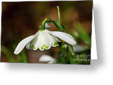 Single Snowdrop Greeting Card