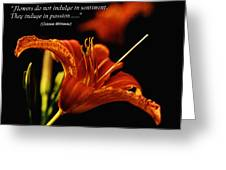 Single Tiger Lily Poster Greeting Card