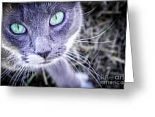 Skitty Cat Greeting Card