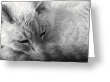 Sleepy Greeting Card