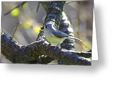 Tufted Titmouse - Small Bird Greeting Card