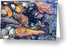 Small Rocks On The Beach Greeting Card