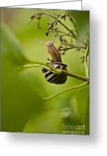 Snail Stretching Greeting Card