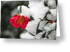 Snow Bloom Greeting Card by Suzanne Gaff