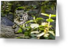 Snow Leopard Greeting Card