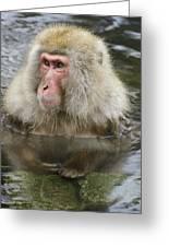 Snow Monkey Bath Greeting Card