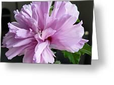 So Pink Greeting Card