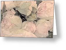 Soft Pink Peonies Greeting Card