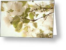 Soft White Flowers Greeting Card