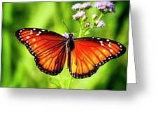 Soldier Butterfly Greeting Card