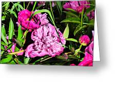 Sounds Of Summer  Greeting Card