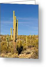 South Mountain Cactus Greeting Card