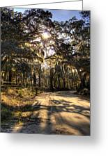 Southern Oak Shadows  Greeting Card